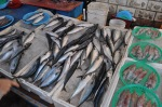 korean-fish-market