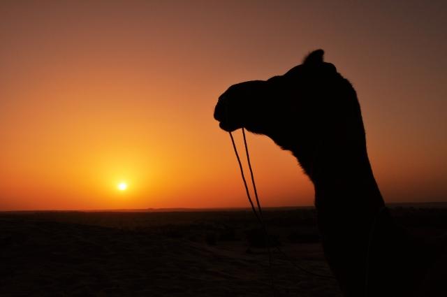 camel_sunset.jpg