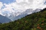 Orange flowers in Himalayas