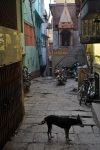 varanasi_streets