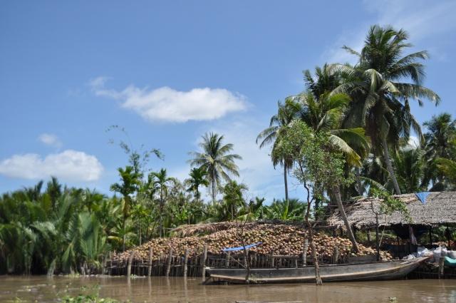 coconut mekong delta