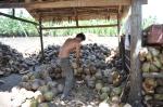 coconut mekong vietnam