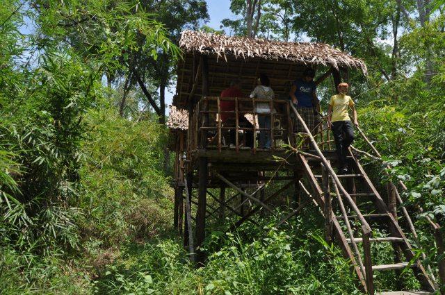 gibbon sanctuary