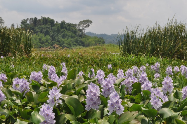 vietnam_crocodile lake